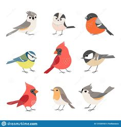 Collection Of Cute Winter Birds Stock Vector – Illustration of vector, bird: 131539165 Illustration about Set of cute colorful winter birds isolated on white background. Illustration of vector, bird, design – 131539165 Vogel Illustration, Winter Illustration, Cute Illustration, Vogel Clipart, Illustration Mignonne, Bullfinch, Bird Drawings, Easy Drawings, Cute Birds