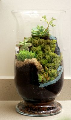 Another World Succulent Waterfall Terrarium by AnotherWorldPlants - or air plants Succulents In Containers, Cacti And Succulents, Planting Succulents, Planting Flowers, Cactus Plants, Air Plants, Garden Plants, Indoor Plants, Indoor Herbs