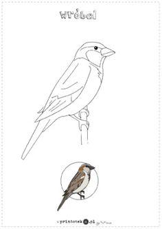 Ptaki zimujące w Polsce. Zestaw 7 kolorowanek - Printoteka.pl Bird Embroidery, Embroidery Designs, Log Cabin Quilt Pattern, Bird Theme, Bird Prints, Silhouette, Quilt Patterns, Needlework, Techno
