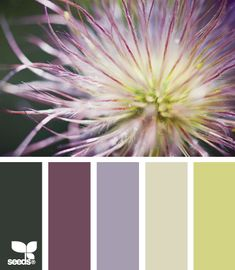 Flora Tones: Forest Green, Plum, Wisteria Purple, Faded Lime and Moonraker Green Yellow