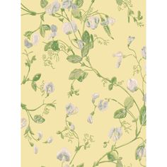 BuyCole & Son Sweet Pea Wallpaper, 100/6029 Online at johnlewis.com