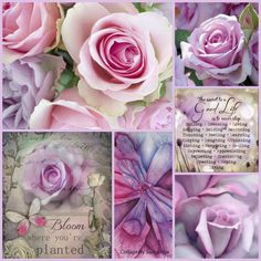 Lavender Rose Collage