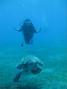 sea turtle & me, abu dabbab, egypt