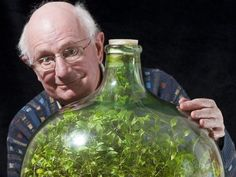 Terrarium: Still going strong: Pensioner David Latimer from Cranleigh, Surrey, with his bottle garden that was first planted 53 years ago and has not been watered since 1972 - yet continues to thrive in its sealed environment. Mini Terrarium, Garden Terrarium, Bottle Terrarium, Bottle Plant, Water Terrarium, Snake Terrarium, Hanging Terrarium, Container Gardening, Gardening Tips