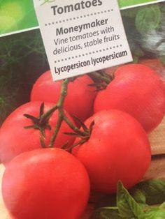 VIDA FELIZ: na Horta: Como Semear, Plantar e Colher TOMATE RAMA