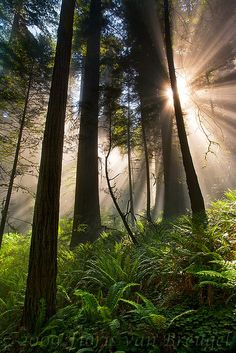 Redwood National Park / Floris Van Breugel RAYOS DE SOL EN EL BOSQUE