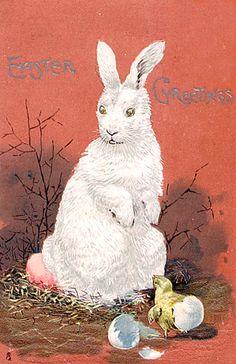 Lovely White Bunny