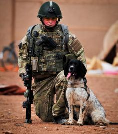 Military Working Dog Theo, who died just hours after his handler Lance Corporal Liam Tasker was killed in is to be posthumously honoured with the animal's Victoria Cross - the PDSA Dickin Medal. Army Dogs, Police Dogs, Military Working Dogs, Military Dogs, English Springer Spaniel, Service Dogs, Mans Best Friend, My Idol, Lance Corporal