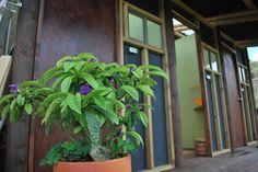 los baños Plants, Places, Plant, Planets