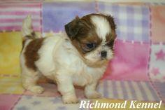 71 Best Puppy Images Dog Behavior Dog Training Tips Pet Health