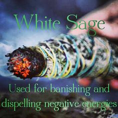 WHITE SAGE- Ancient use to rid area of negative energies and bring in positive energy!
