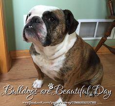 21Apr15 Fenway - Bulldog -Bulldogs are Beautiful Day