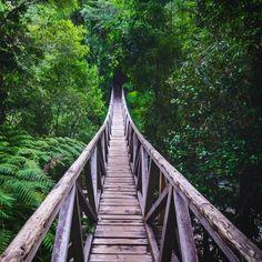 (41) Twitter Adentrándose en el poblado bosque templado húmedo del Parque Pumalín, en la región de Los Lagos. ( via andres.sanchezg   IG ) Chile