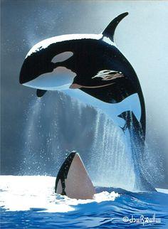 Orcas by Joe Roselle Orcas, Rare Animals, Animals And Pets, Strange Animals, Wild Animals, Photo Dauphin, Beautiful Creatures, Animals Beautiful, Underwater Animals