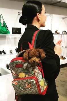 Katy Perry wearing  Gucci Blooms Gg Supreme Backpack