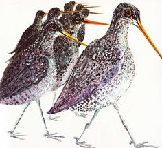 Vintage Kids' Books My Kid Loves: Brian Wildsmith's Birds 1967 a walk of snipe
