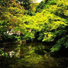 芸術的な美しさ。 ただ、ただ、見惚れる。  #清水寺 #kiyomizudera #京都 #kyoto #京都旅行  #kyototrip #kyotojapan #日本 #japan  #クールジャパン #cooljapan #cool #快晴 #最高  #instagood #instadaily #instatrip #instatravel  #travel #travelphotography #traveling #awesome  日本人に生まれてよかった #nature #自然 #beautiful  #beauty http://tipsrazzi.com/ipost/1523954778194086079/?code=BUmLMvoBIi_