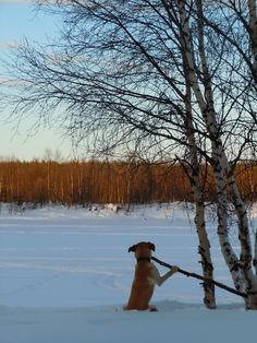 Magic of Lapland