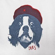Tee-shirt garçon IKKS