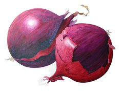 A botanical study in watercolour of red onions, painetd by Leone Annabella Betts in 2018