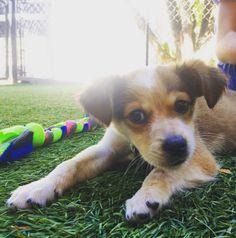 Relaxing at Marin Humane Society Dog Park - Novato, CA - Angus Off-Leash #dogs #puppies #cutedogs #dogparks #novato #california #angusoffleash