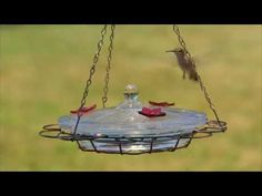 I want a couple of these Oasis feeders! Looks easy to clean. Years ago I had to call Perky-Pet customer service, cant remember why, but they were so nice. I have made it a point to buy Perky-Pet stuff ever since. Glass Hummingbird Feeders, Humming Bird Feeders, How To Attract Hummingbirds, Outdoor Living, Outdoor Decor, Trees And Shrubs, Pet Stuff, Customer Service, Garden Plants