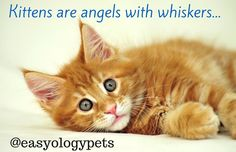 kittens are angels with whiskers! @easyologypets