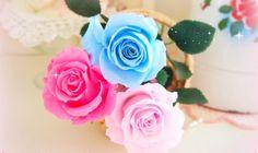 kawaii Roses