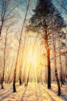 Den Sonnenaufgang bei Schnee beobachten und lange Waldspaziergänge machen >> Winter