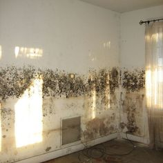 Top Tips for Getting Rid of Damp and Mould |Never Paint Again