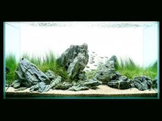 Film Takashi Amano aquarium aquascaping