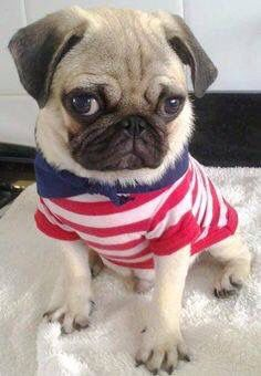 T shirt, legging, hoodie for Pug lovers. Order here: https://www.sunfrog.com/JohnyD/pug shirts