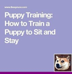 It Likewise Includes Teaching Your Pet Self Discipline Especially