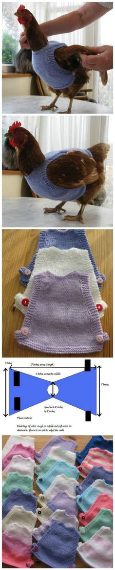 I NEED TO MAKE SOME OF THESE FOR MY HUSBAND'S CHICKENS....LOL!!  DIY Chicken Sweaters