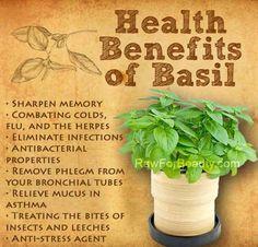 Health benefits of Basil