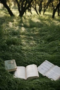 books on a bed of tall grass