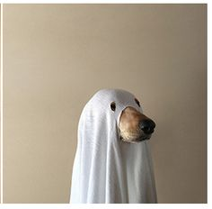maddie the coonhound thiswildidea.com