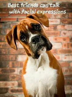 Best friend #Boxer