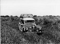 Peugeot Sports - 203 Paris, le Cap, Alger, Paris- 1951