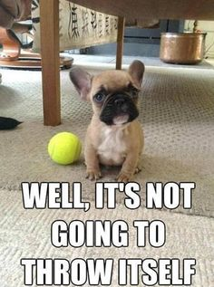 Funny Cute French Bulldog My cat feels the same way.