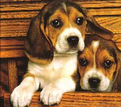 beagles.jpg image by ro1199 - Photobucket