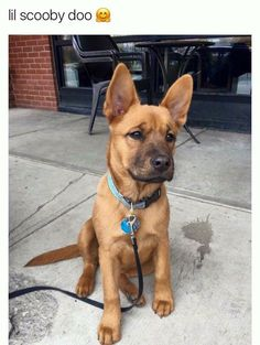 Baby Scooby-Doo!  #scoobydoo