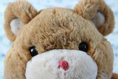 Meu urso TED