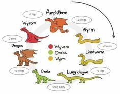 Finally a chart for different types of dragons!!!