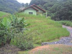 Slope stabilized after 3 years of using Vetiver .This photo was taken yesterday afternoon .in Pomerode, SC in Brazil South.Its slope has resisted many. Soil Conservation, River Bank, Sustainable Living, Sustainability, Around The Worlds, House Styles, Plants, Pictures, Ideas
