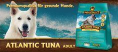 Atlantic Tuna - Trockenfutter für ausgewachsene Hunde mit Thunfisch und Meeressalat. Trockenfutter für Hunde erstmals mit Moringa oleifera #wolfsblut #hundefutter #healthfood24