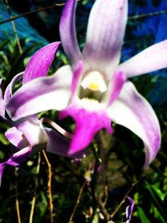 #Orchids#Flower Arches, National Parks, Flowers, Plants, Beauty, Beleza, Floral, Plant, Royal Icing Flowers