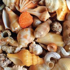 More than 300 types of shells wash up on Sanibel beaches. I wrote an article about my visits to Sanibel and Captiva for Evansville Living magazine.