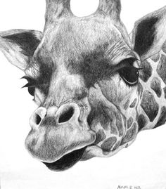 Realistic Pencil Animal Drawings -- High School Art Project