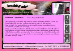 Customer Testimonial of EssentiallyPurrfect #mobile #dlh #cat #catgrooming service. Lorraine. #Macclesfield #cheshire